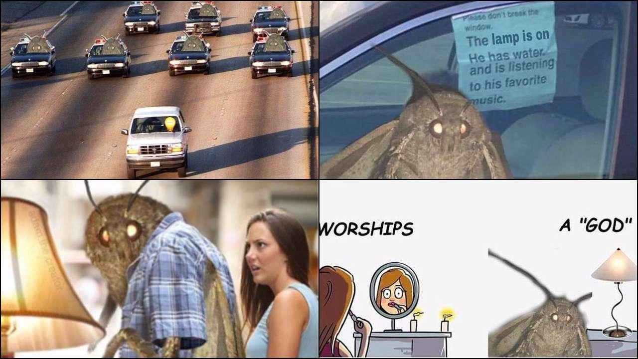 737532-moth-meme[1]